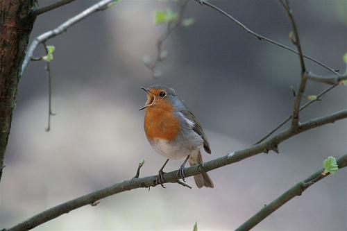 robin-bird-by-webted-via-flickr.jpg