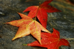 fall-leaves-by-smallchih-v-flickr.jpg