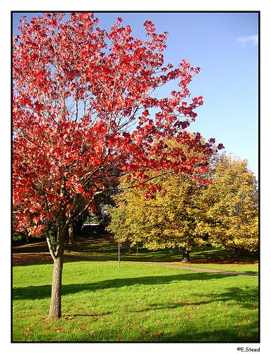 red-tree-sky-by-flummoxed-1-via-flickr.jpg