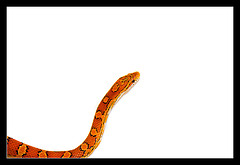 sprocket-7-snake-by-dead-by-sunrise-via-flickr.jpg