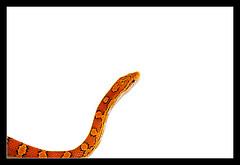 sprocket-7-snake-by-dead-by-sunrise-via-flickr.jpg