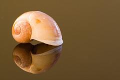 florida-shell.jpg
