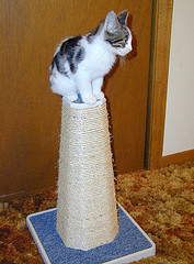 cat-on-top-of-scratching-post.jpg