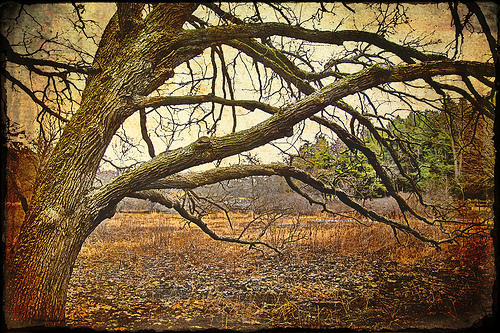 winter-tree-by-bossbob501